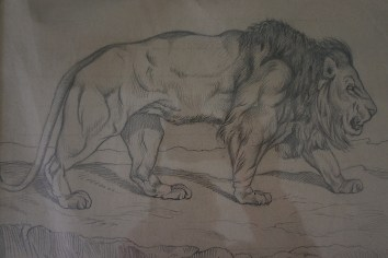 Le lion de l'Atlas (dessin original)