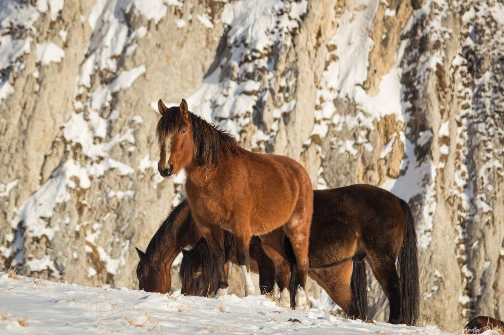 32 - Plimbare de iarnă în Piatra Mare