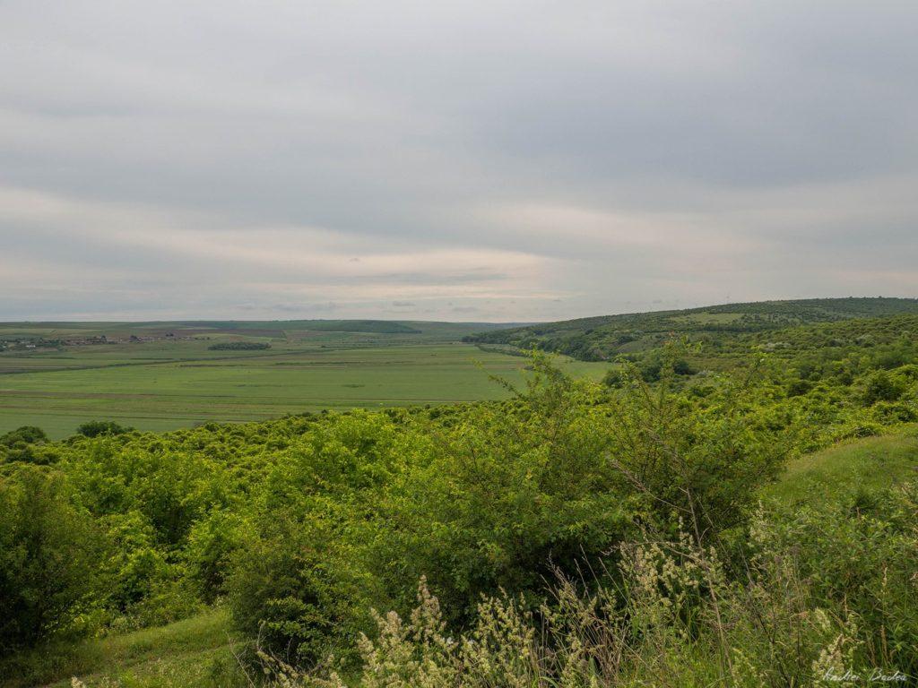 8 - Istorie și maci în Dobrogea, spre Adamclisi