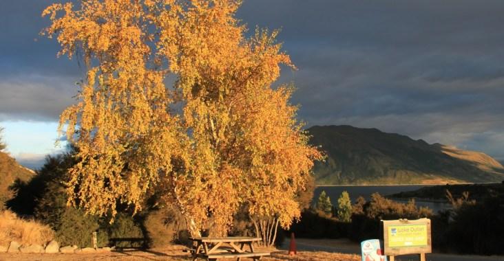 albero e lago in autunno