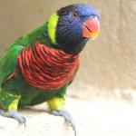 <b>Kuala Lumpur bird park</b>