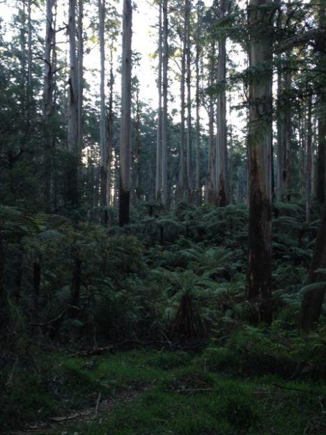 Melbourne 2014 - 026