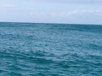 Gold Coast 2015 - 174 of 608