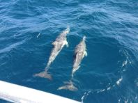 Gold Coast 2015 - 326 of 608