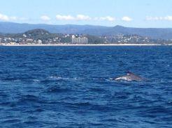 Gold Coast 2015 - 482 of 608