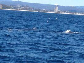 Gold Coast 2015 - 485 of 608