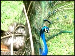 Um pão - Pesqueiro do Pacu-SP (2007)