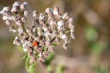 Ladybug learning camouflage