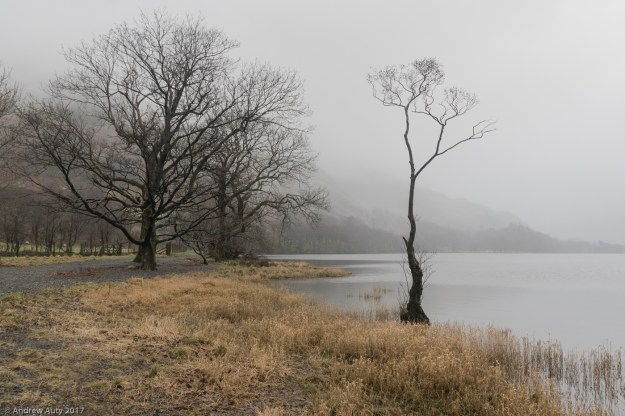 Buttermere Tree in Mist