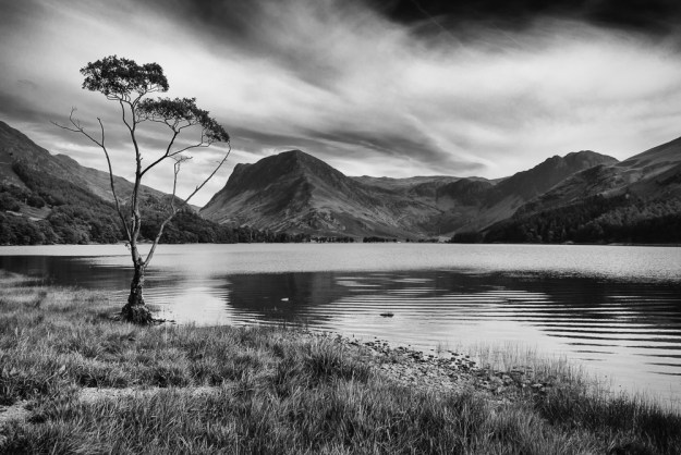 1 The Famous Buttermere Tree