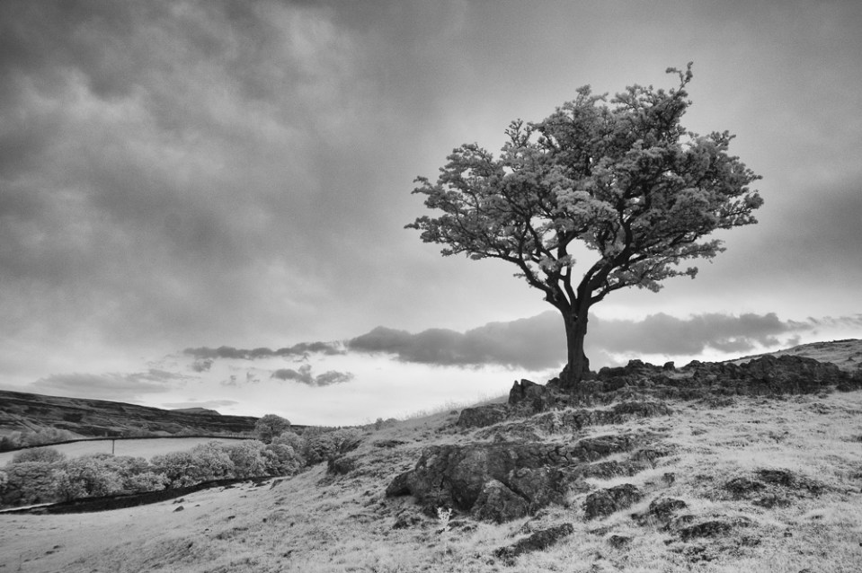 13 Lone Tree Ingleton