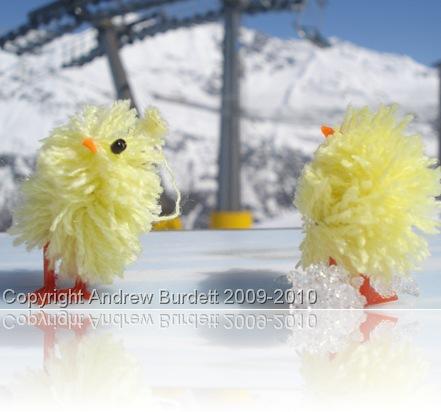 Easter Chicks I took skiing last April