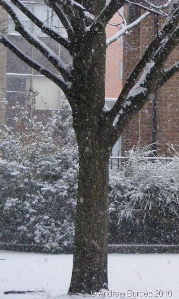 TREE SNOW_A snowy scene in Maidenhead on Saturday.