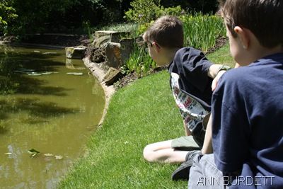 SEA WHAT I CAN SEE_Matthew, ten, looks to see the fish in the water garden.
