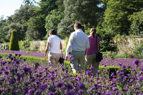 AFTERNOON STROLL_Mum, Dad, and Harriet walking through a lavendar garden.