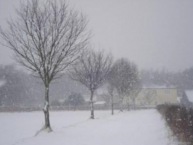 Trees in a snowy scene in Maidenhead.