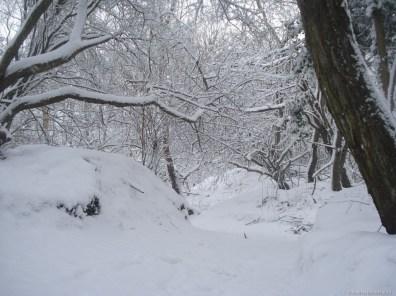A woodland near the former Pinkneys Green (Malden Lane) Brickworks.