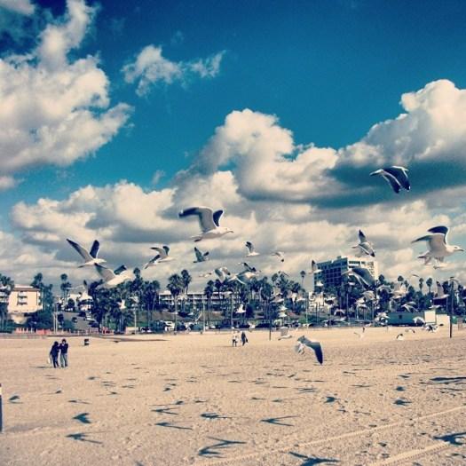 Throwback #LosAngeles, #California. #beach #seagulls