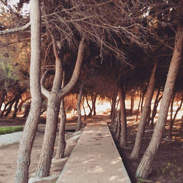 Molino del Agua Park, Torrevieja, Spain#nature #park #spain #ig_life #trees #spanien #ig_captures #torrevieja #instagood #ig_natureshots #ig_nature #tree #españa #natureshots #beautiful #instanature #landscape #landscapes #citypark #instadaily #outdoor #parquenatural #nature_ig #instatrees #espagne #summer #verano #parks #parque #costablanca