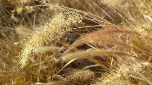 Dry grass. Summer pictures from Torrevieja, Spain 1