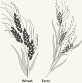 wheat-tares_1171257_inl