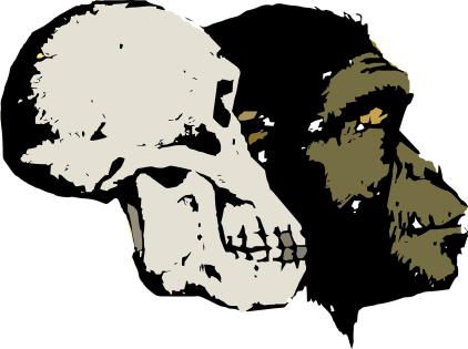 evolution-1524027_1280
