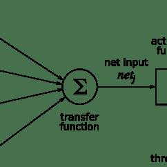 Basic Neuron Diagram Face Muscles Artificial Neural Networks