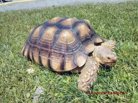 Tortoise Long Beach CA