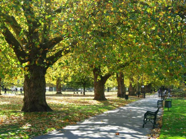 Trees in Kennington Park, London.