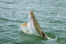 Fishing Charters Sanibel
