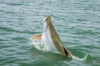 Fishing Charters Sanibel