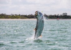 Tarpon Fishing Charters