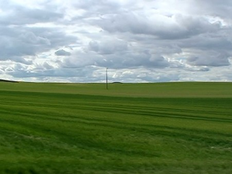 kansas-wheat-fields-in-valladolid-spain