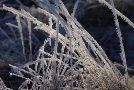 grass-crystal-161229-480x324