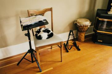 Andy-Slade-music-room-cat