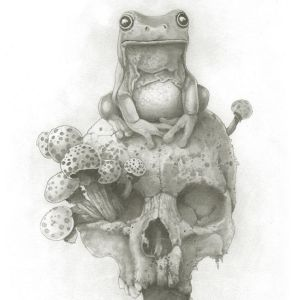 Pencil drawing frog sitting on a skull