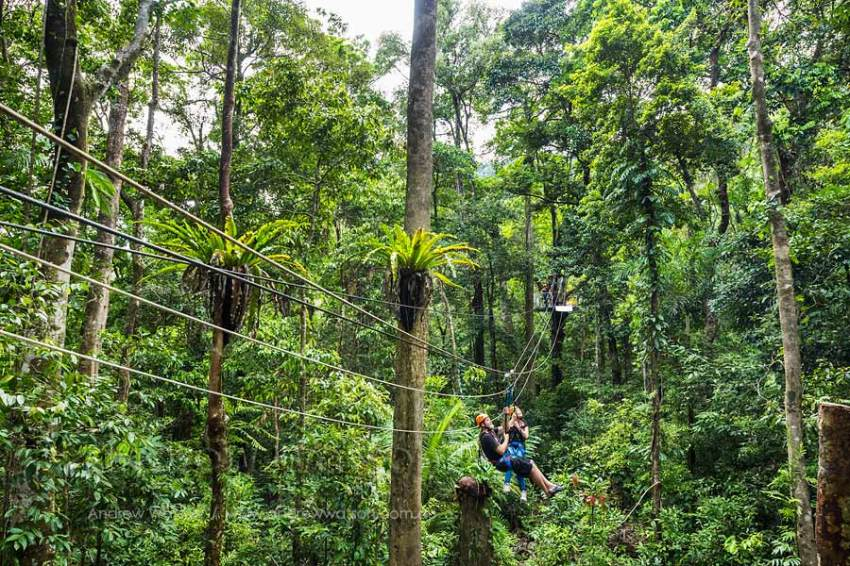 Couple ziplining in Daintree rainforest canopy