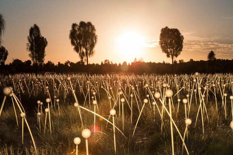Image of the Field of Light Installation at sunrise