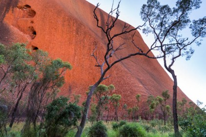 Image of green scenery on the Mutitjulu Waterhole track at Uluru