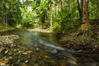 Clear waters of a Cooper Creek rainforest stream in the Daintree