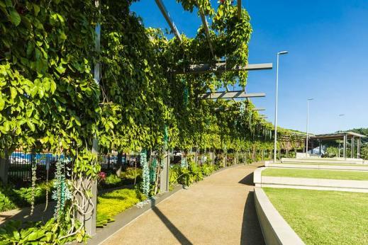 View along an arbour walkway covered in jade vines in bloom