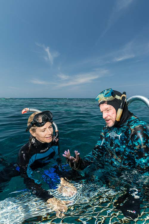 Two scientists in the water looking at a piece of live coral used for reef restoration projects on the Great Barrier Reef