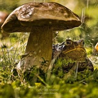 Лягушка и гриб