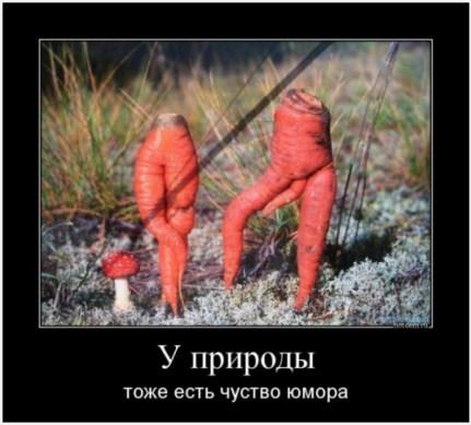 Эротика из моркови. Демотиватор