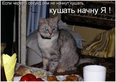 Кошка Милка торопит хозяев с ужином