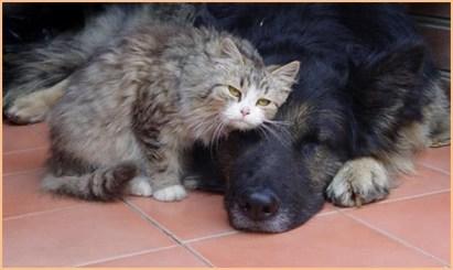 Кошка Мотя дружит с псом Бураном