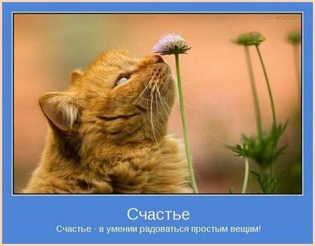 Кот радуется цветку на лугу