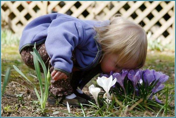 Малыш нюхает первоцветы