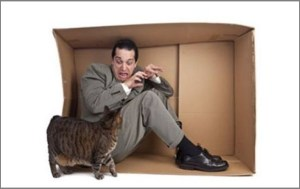 боязнь кошек как фобия