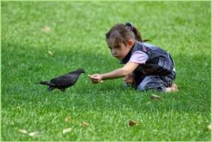 Девочка кормит голубя